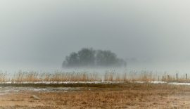 Foggy Hour
